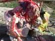 "Alex Becerra, ""Big gobblers don't give second chances,"" 2012, Mixed media on wood"